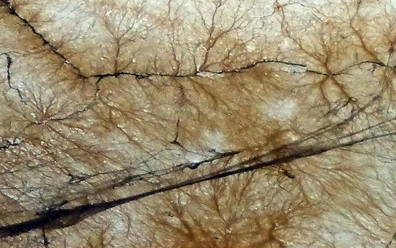 champignon de type merule à traiter